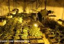 Detenida otra mafia china que cultivaba marihuana en naves.