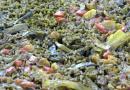 Paella de verduras y bacalao
