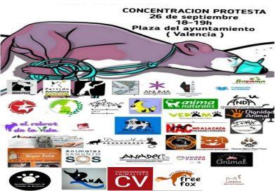 """CONCENTRACIÓN EL SÁBADO POR TIMPLE EN VALENCIA: """"CONTRA EL MALTRATO ANIMAL"""""""