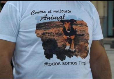 PIDEN EN VALENCIA AUMENTAR LAS PENAS POR MALTRATO ANIMAL.