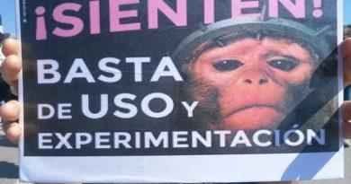 Concentración en Valencia contra la experimentación animal.